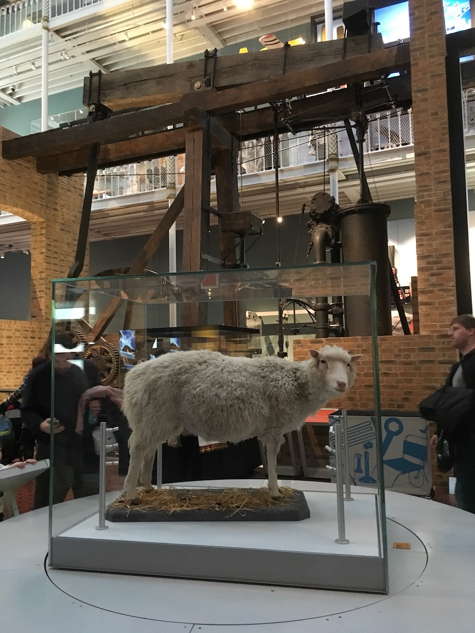 这个玻璃盒子一直在转 Dolly the sheep一定很晕吧;背景是瓦特1786年设计的蒸汽机
