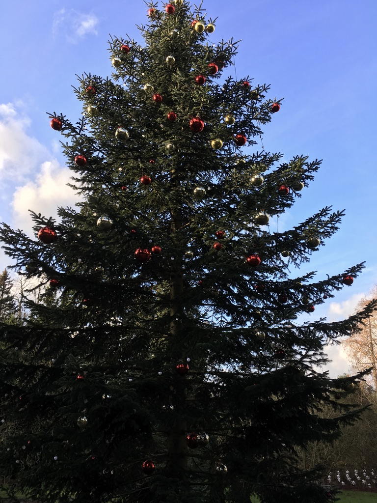 邱园里的圣诞树