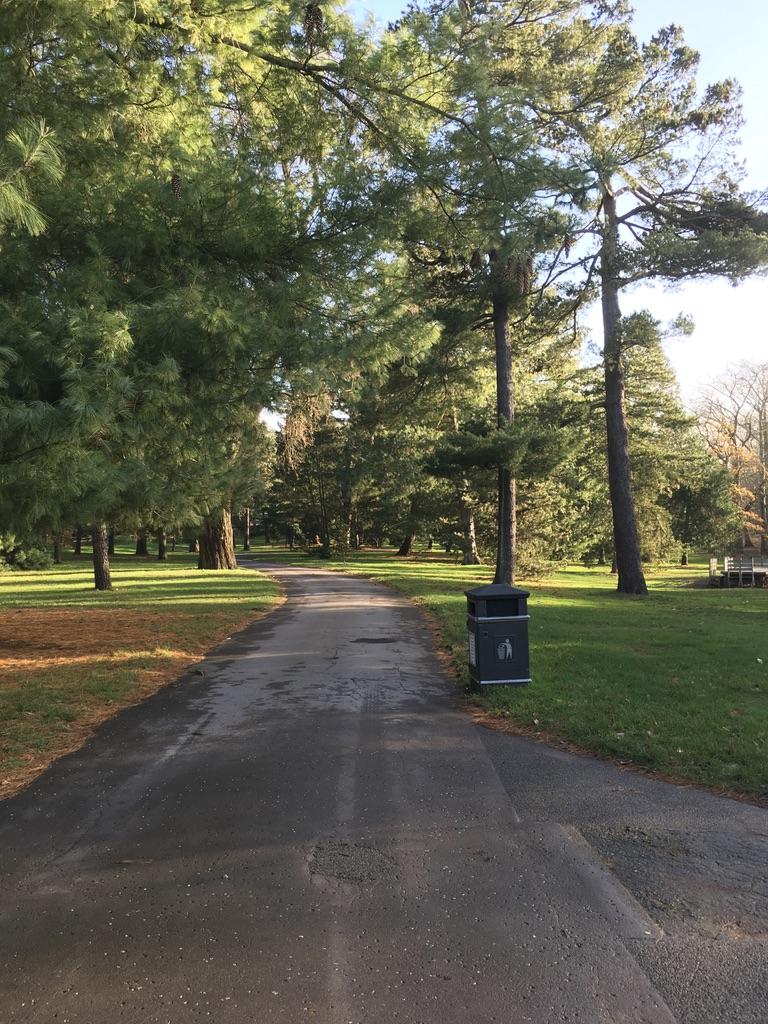 常绿的松树林,散步的好地方