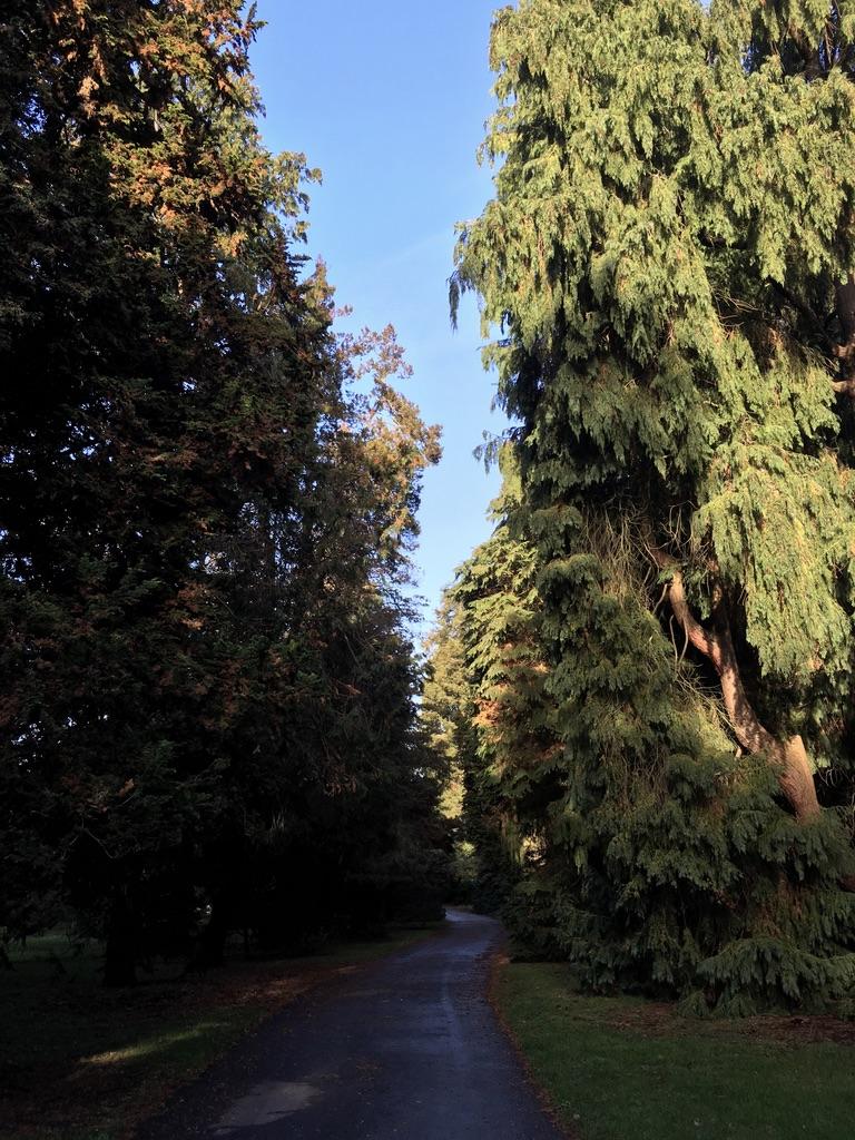 园子很大,走着走着就剩下我一个人了,在幽静的树林里漫步很惬意