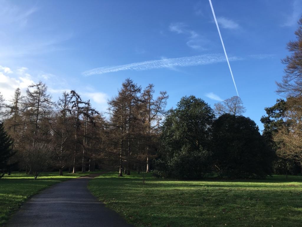 英国的冬天不是很冷,树叶落得差不多得了,但草依旧还是绿的