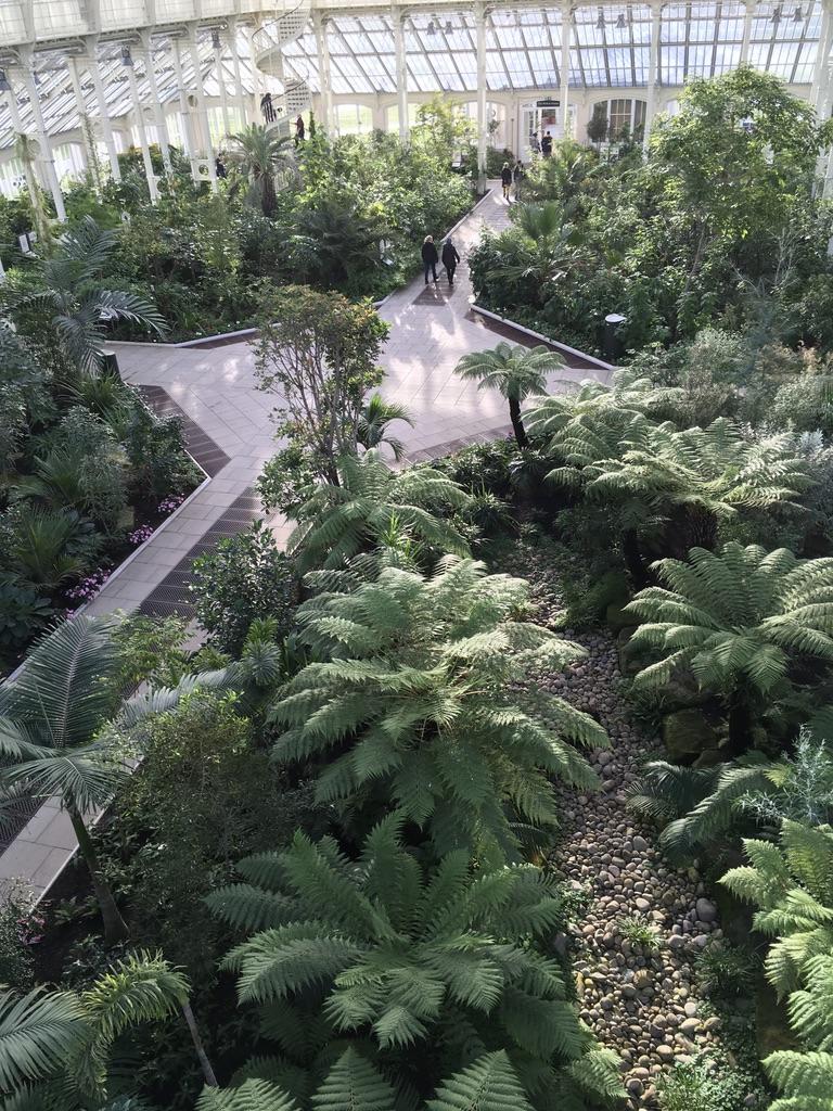 里面是一些温带的珍惜植物