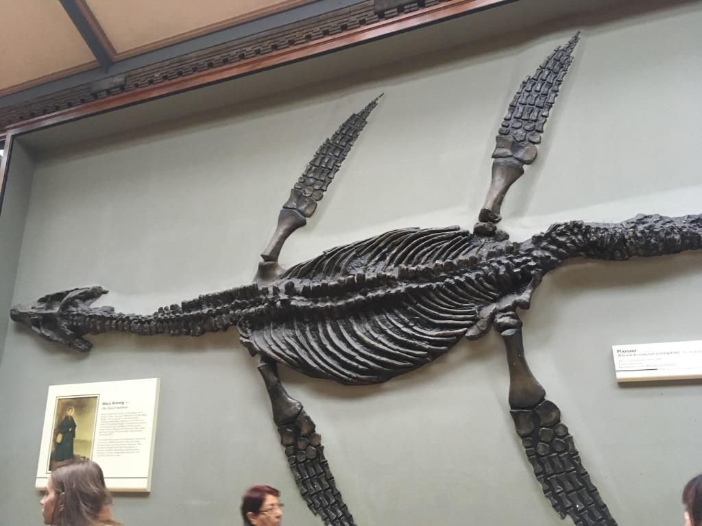 上龙(pliosaur),侏罗纪晚期(2亿年前)的海生爬行动物