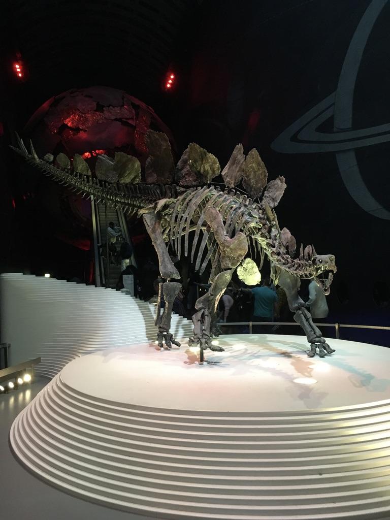 世界上最完整的剑龙(Stegosaurus)化石