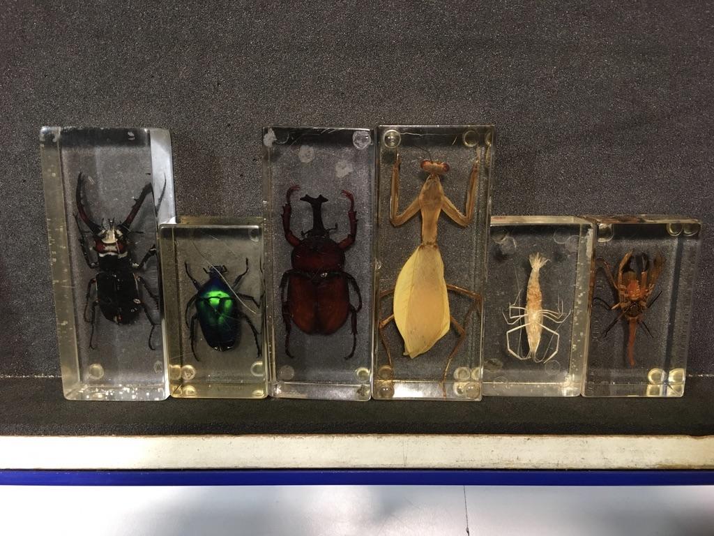 各种昆虫的标本