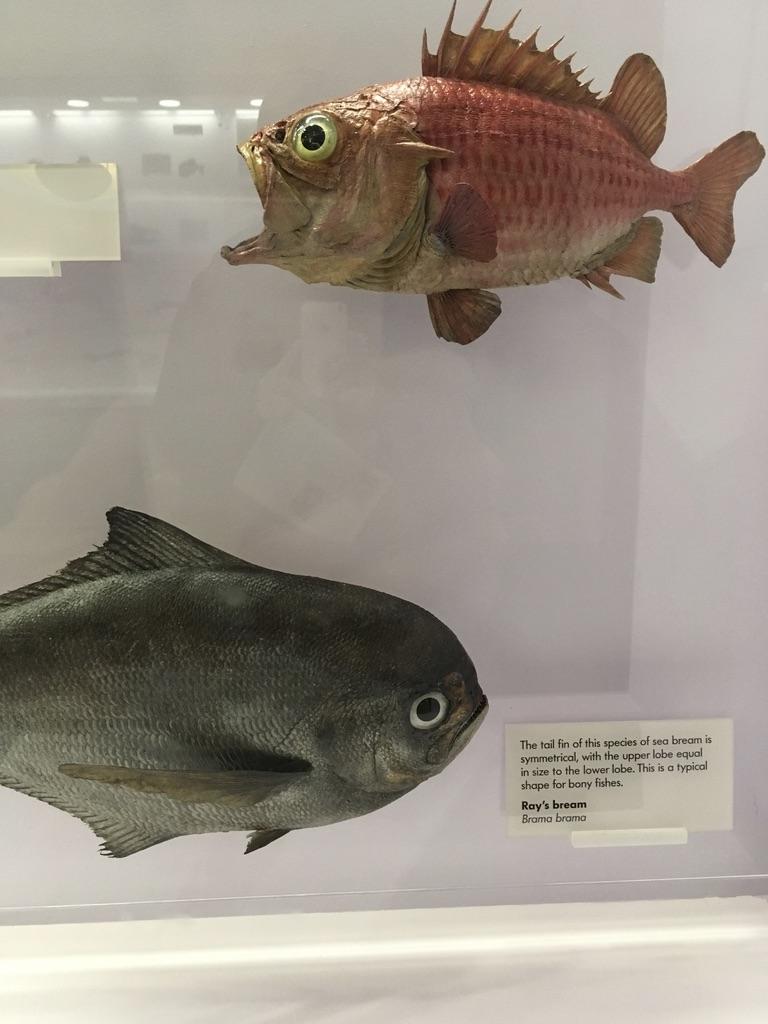 这两条鱼真逗