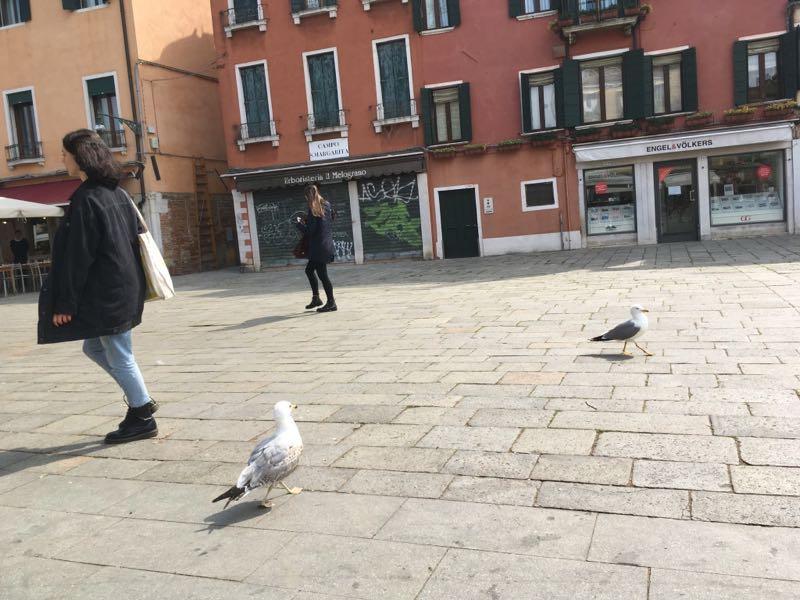 坐在广场的长椅上,一边吃一边享受阳光,海鸥对我虎视眈眈