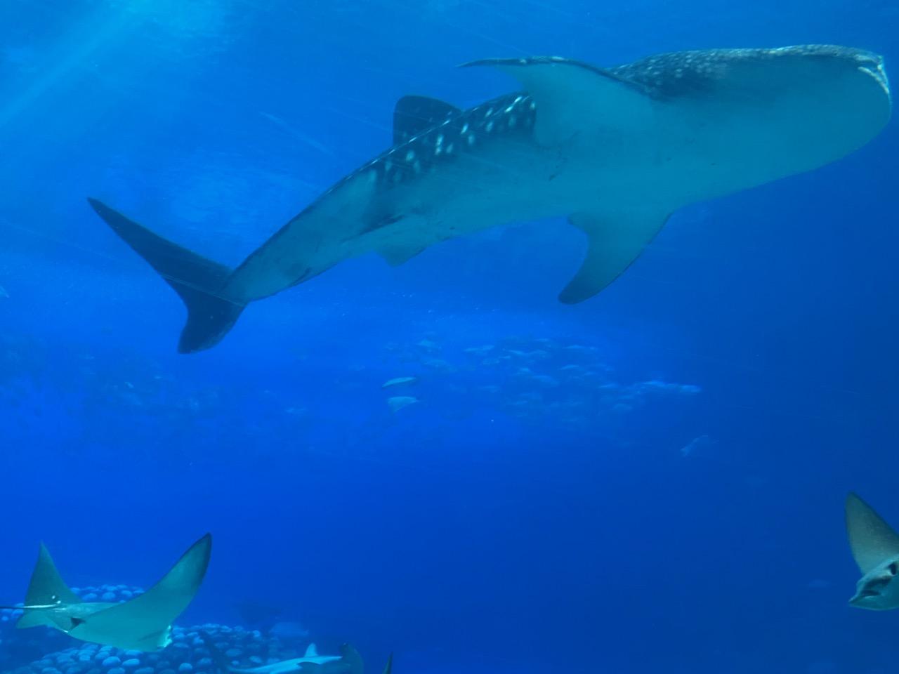 珠海长隆海洋王国鲸鲨馆
